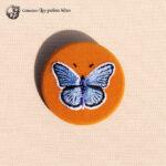 Papillon Azurée